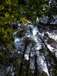 cedar sink looking up